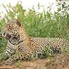 23Sep19 Pantanal 022