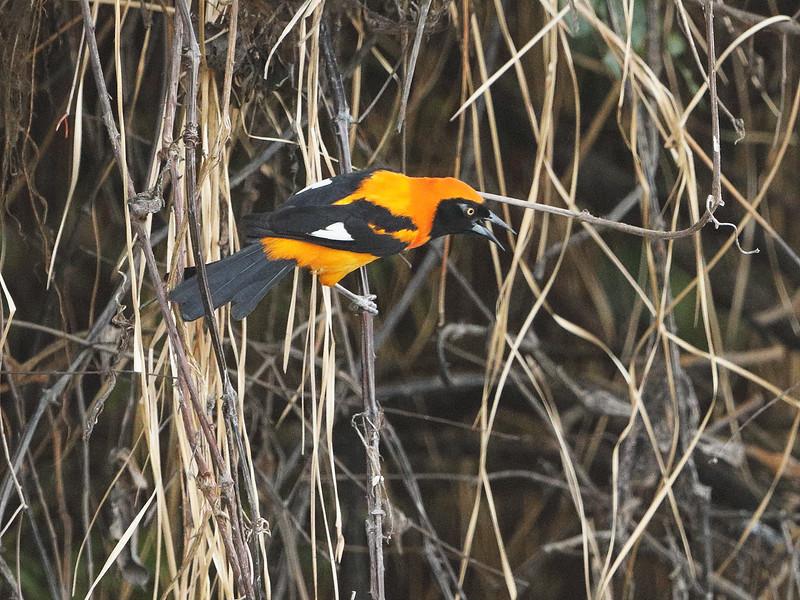 23Sep19 Pantanal 132