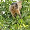 23Sep19a Pantanal 247