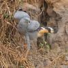 22Sep19 Pantanal 273