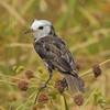 22Sep19 Pantanal 129