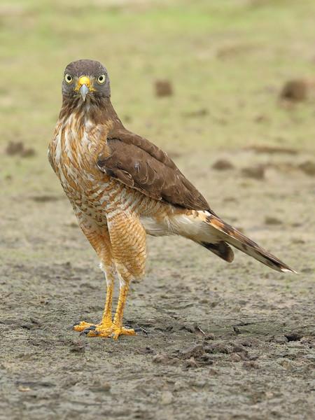 27Sep19 Pantanal 123