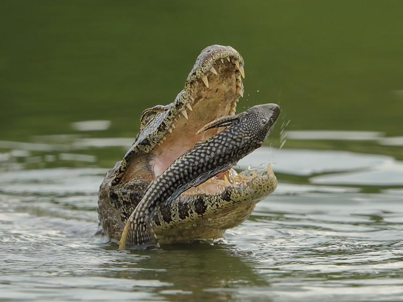 27Sep19b Pantanal 152