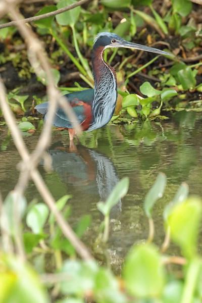 21Sep19 Pantanal 268