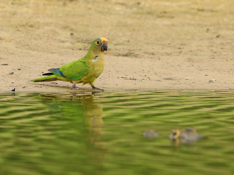 27Sep19b Pantanal 131a