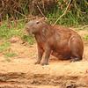 22Sep19a Pantanal 296