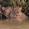 21Sep19a Pantanal 157 - Copy