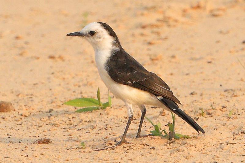 24Sep19b Pantanal 149