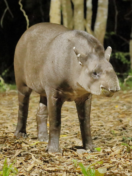 28Sep19a Pantanal 395