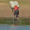 27Sep19a Pantanal 232