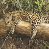 22Sep19a Pantanal 203
