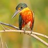 20Sep19 Pantanal 196