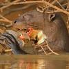 24Sep19 Pantanal 084crop