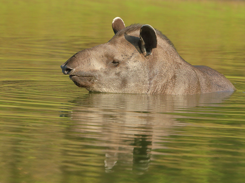 27Sep19a Pantanal 464
