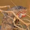23Sep19 Pantanal 177