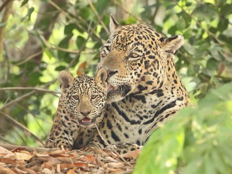 24Sep19b Pantanal 038