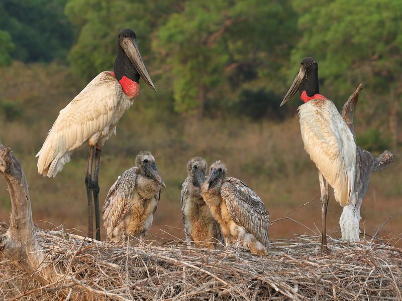 21Sep19 Pantanal 154crop