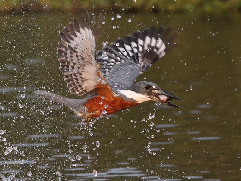 21Sep19 Pantanal 592
