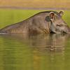 27Sep19a Pantanal 575