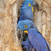 22Sep19 Pantanal 183