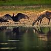 27Sep19a Pantanal 114soft