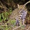 20Sep19a Pantanal 812 - Copy
