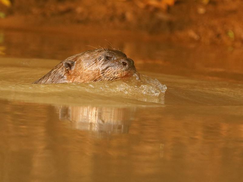 24Sep19 Pantanal 007