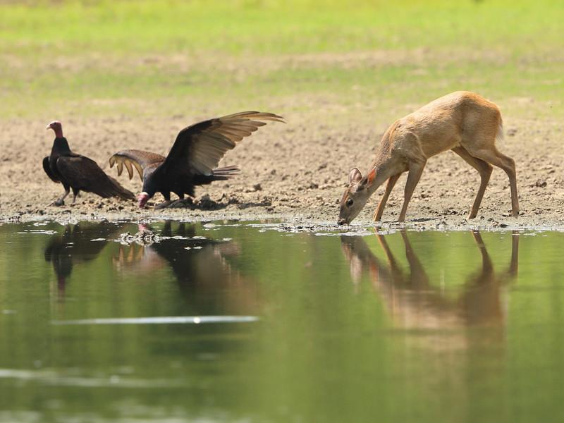 27Sep19a Pantanal 117