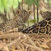 23Sep19 Pantanal 042 - Copy