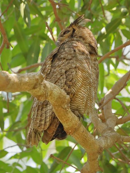 22Sep19 Pantanal 110