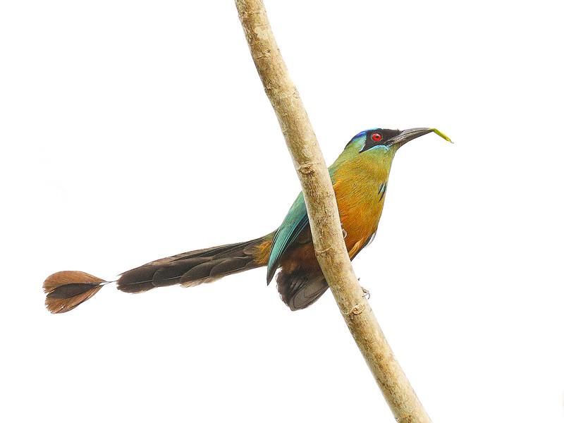 28Sep19a Pantanal 007closeup