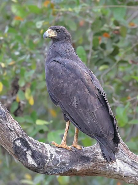 20Sep19a Pantanal 161