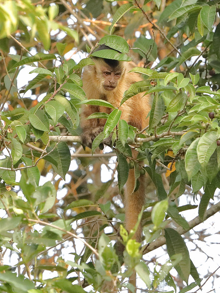 21Sep19a Pantanal 294