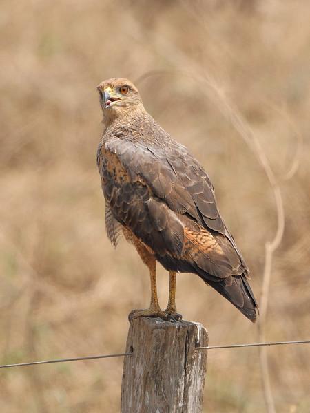 20Sep19 Pantanal 013