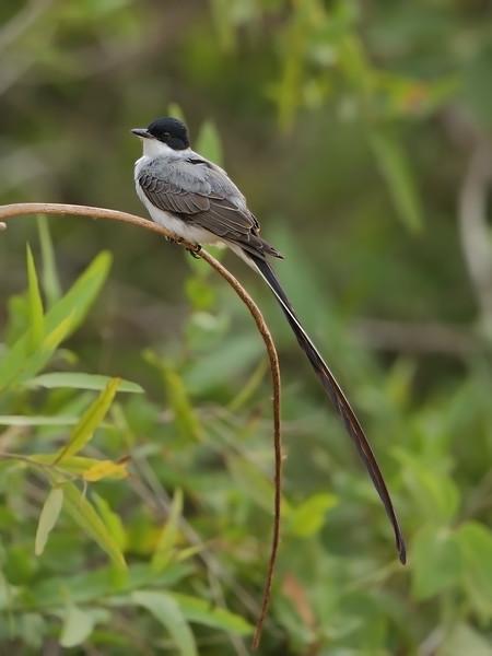 24Sep19b Pantanal 195