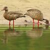27Sep19b Pantanal 052