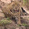 24Sep19 Pantanal 338portrait
