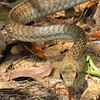 21Sep19 Pantanal 428