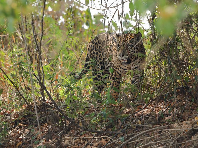 24Sep19 Pantanal 405