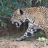 23Sep19 Pantanal 035