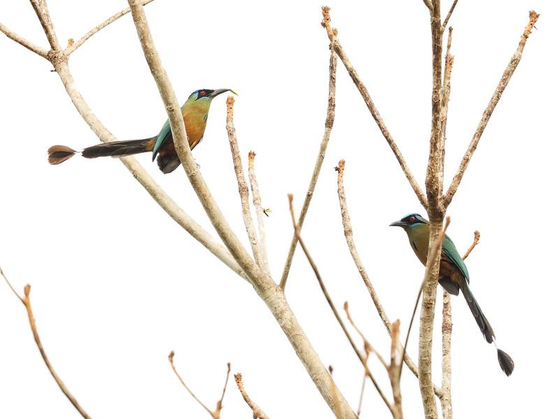 28Sep19a Pantanal 006