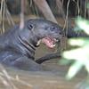 23Sep19 Pantanal 218