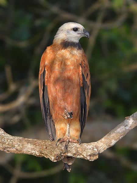 20Sep19 Pantanal 184