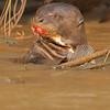 24Sep19 Pantanal 146