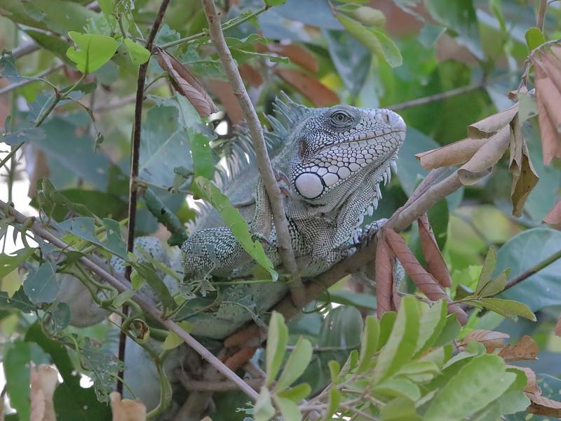 20Sep19 Pantanal 222