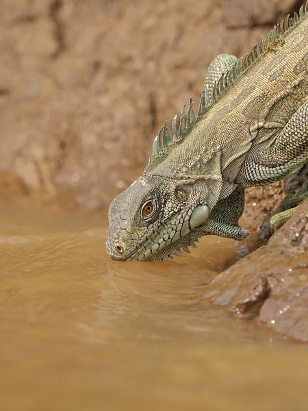 21Sep19a Pantanal 091