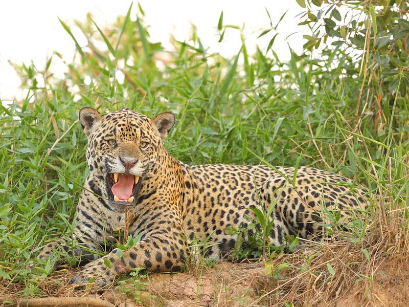23Sep19 Pantanal 004