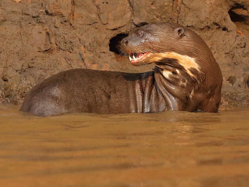 24Sep19 Pantanal 224