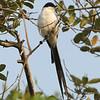 24Sep19 Pantanal 278
