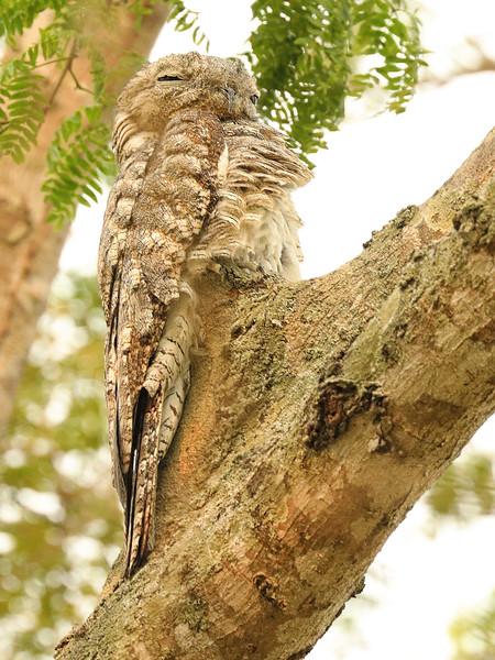 22Sep19a Pantanal 254